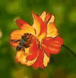 bee-n-flower01-300px