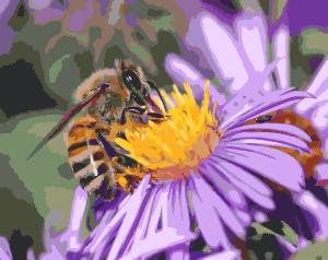 European-honey-bee-extracts-nectar-2016121820-300px